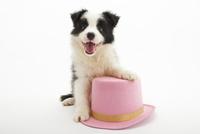 口をあけて笑う仔犬 02322009412| 写真素材・ストックフォト・画像・イラスト素材|アマナイメージズ