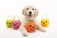 口をあけて笑う仔犬 02322009421| 写真素材・ストックフォト・画像・イラスト素材|アマナイメージズ