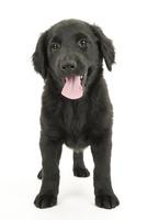 口をあけて笑う仔犬 02322009473| 写真素材・ストックフォト・画像・イラスト素材|アマナイメージズ