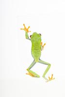 上から見たカエルの背中 02322009790| 写真素材・ストックフォト・画像・イラスト素材|アマナイメージズ