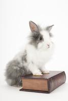 本の上にのるウサギ 02322010055  写真素材・ストックフォト・画像・イラスト素材 アマナイメージズ