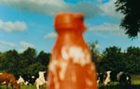 赤いカラーコーンと牧場の牛
