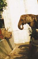 動物園のサイと象