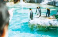 動物園のペンギン