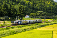 稲田を走る越乃Shu*Kuraと上越線