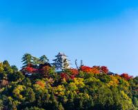 秋の郡上八幡城