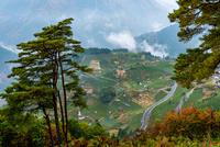 靄が棚引く秋の天空の茶畑