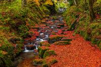 秋の横蔵寺