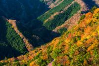 秋のナメゴ谷