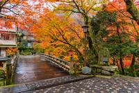 秋のこうろぎ橋