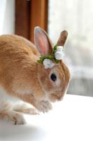 耳に白い花をつけたうさぎ