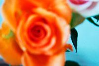バラの花 02332000060| 写真素材・ストックフォト・画像・イラスト素材|アマナイメージズ