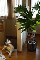 本を読む子供と観葉植物 02332000082| 写真素材・ストックフォト・画像・イラスト素材|アマナイメージズ