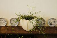棚の上に置かれた観葉植物とお皿 02332000086| 写真素材・ストックフォト・画像・イラスト素材|アマナイメージズ