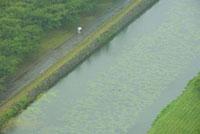 水辺の道を傘をさして歩く人 02332000225| 写真素材・ストックフォト・画像・イラスト素材|アマナイメージズ