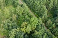 緑の間の道