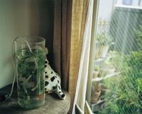 犬のぬいぐるみと丸い水槽 02332000268| 写真素材・ストックフォト・画像・イラスト素材|アマナイメージズ