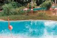 動物園のフラミンゴ 02332000280| 写真素材・ストックフォト・画像・イラスト素材|アマナイメージズ