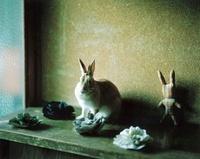 棚の上のウサギ