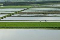 信州安曇野の田植え