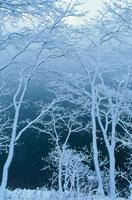 雪化粧の木々