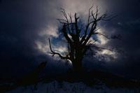 冬空に立つ木