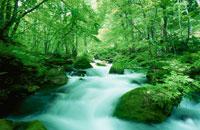 新緑の奥入瀬