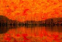 朝日に染まる蔦沼 02335001758| 写真素材・ストックフォト・画像・イラスト素材|アマナイメージズ