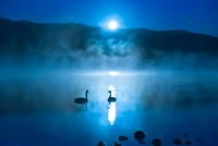 月光に輝く屈斜路湖と白鳥
