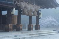 朝靄に包まれる出雲大社御仮殿 02335003638| 写真素材・ストックフォト・画像・イラスト素材|アマナイメージズ