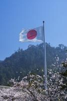 日本晴れの日の丸と桜