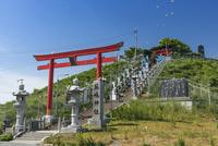 蕪島神社とウミネコ