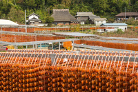 串柿の里神野集落