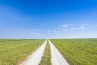 草原と白い道 02335006660| 写真素材・ストックフォト・画像・イラスト素材|アマナイメージズ
