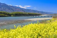 菜の花咲く吉野川