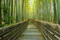 新緑のあだし野念仏寺竹林