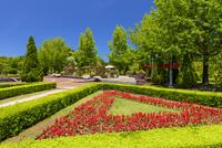 初夏のとっとり花回廊