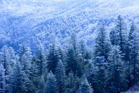 蔵王山樹氷 02335008686| 写真素材・ストックフォト・画像・イラスト素材|アマナイメージズ