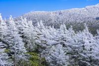 蔵王山樹氷 02335008688| 写真素材・ストックフォト・画像・イラスト素材|アマナイメージズ