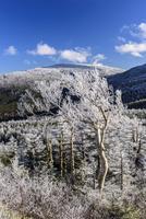 蔵王山樹氷