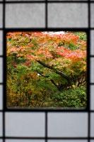 和室から見える紅葉した庭