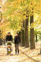 紅葉の並木道を歩く家族