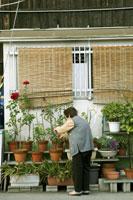 植物の世話をする60代の女性