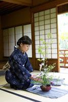 花を生ける着物姿のシニア女性 02336002162| 写真素材・ストックフォト・画像・イラスト素材|アマナイメージズ