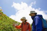 トレッキングで高山植物を見るシニア夫婦