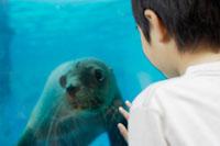 水族館でアシカに見入る男の子