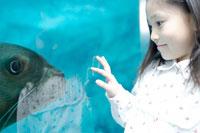 水族館でアシカに見入る女の子