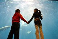 水槽前で手を繋ぐ女の子と男の子 02336004029| 写真素材・ストックフォト・画像・イラスト素材|アマナイメージズ