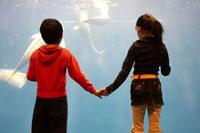 水槽前で手を繋ぐ女の子と男の子 02336004031| 写真素材・ストックフォト・画像・イラスト素材|アマナイメージズ