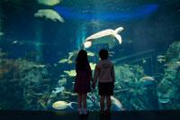 水槽前に立つ女の子と男の子 02336004041A| 写真素材・ストックフォト・画像・イラスト素材|アマナイメージズ